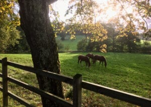 Bryngenäs hästar i hage
